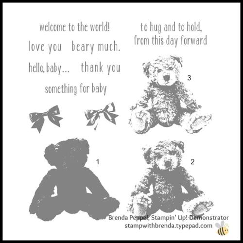Baby Bear SS
