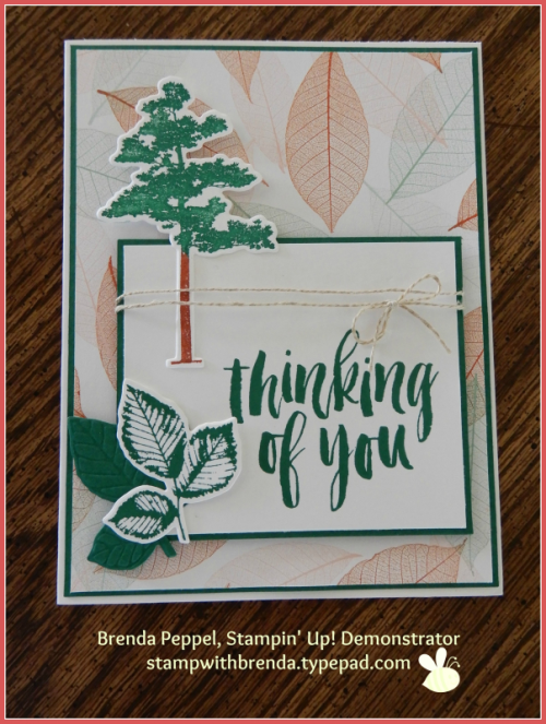 Rooted In Nature Card-Spruce